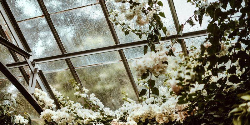 greenhouse-blossoms_925x@2x