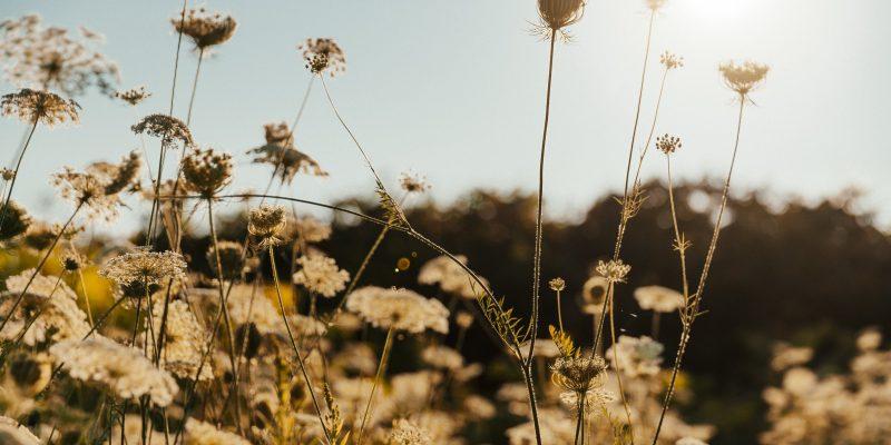 thin-plant-stems-in-sun_4460x4460